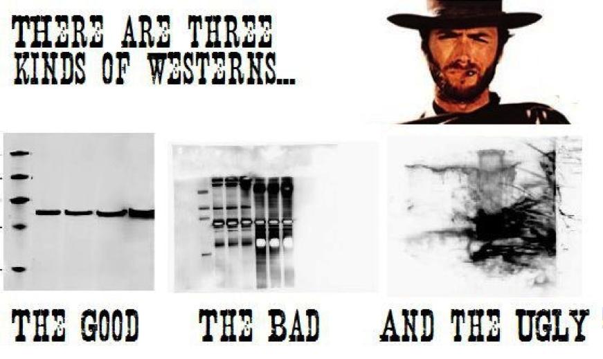 3 kind of western
